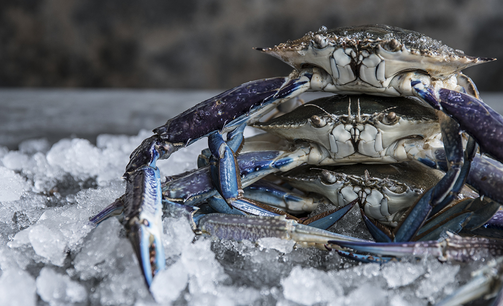Blue swimmer crab for Blue crab fishing