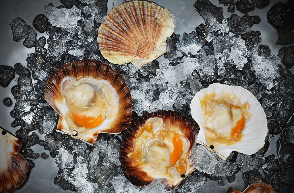 Commercial Scallop_1023
