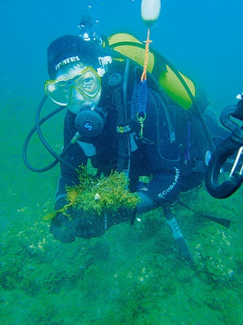 Seaweed-farming-to-boost-finfish-aquaculture