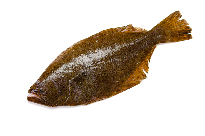 Flatfish Spearhead South Koreas Aquaculture Exports The olive flounder (ヒラメ, hirame) is a saltwater fish in the animal crossing series introduced in doubutsu no mori e+. fishfiles