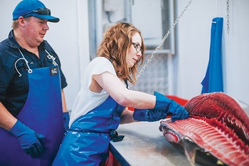 Photo of Morgan Golledge filleting Southern Bluefin Tuna under the supervision of Daniel Jones