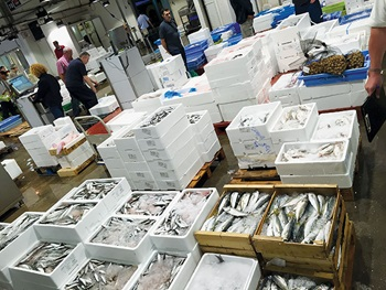Photo of wholesale seafood available at seafood market in Barcelona
