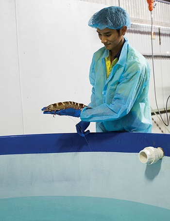 Photo of a technician holding a founder stock Black Tiger Prawn