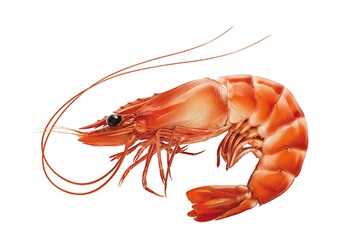 Photo of prawn